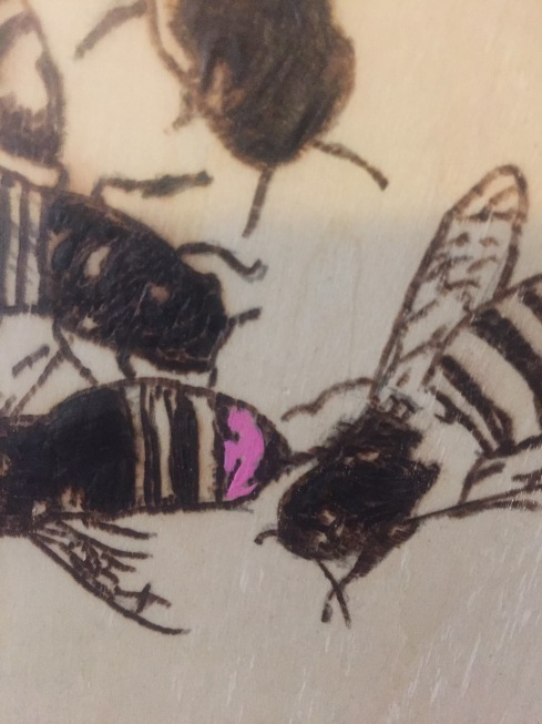 pink bee close up